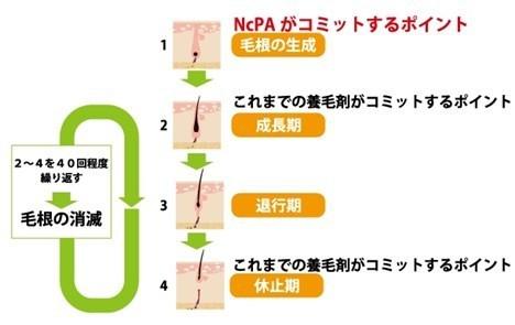 NcPAcommit.jpg
