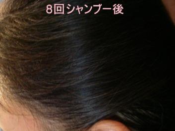 8回のカラーシャンプーで染まった髪