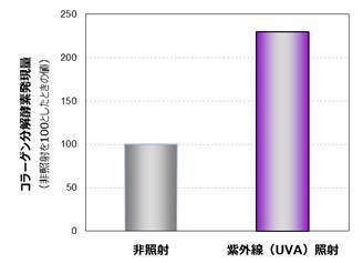 紫外線でコラーゲン減少